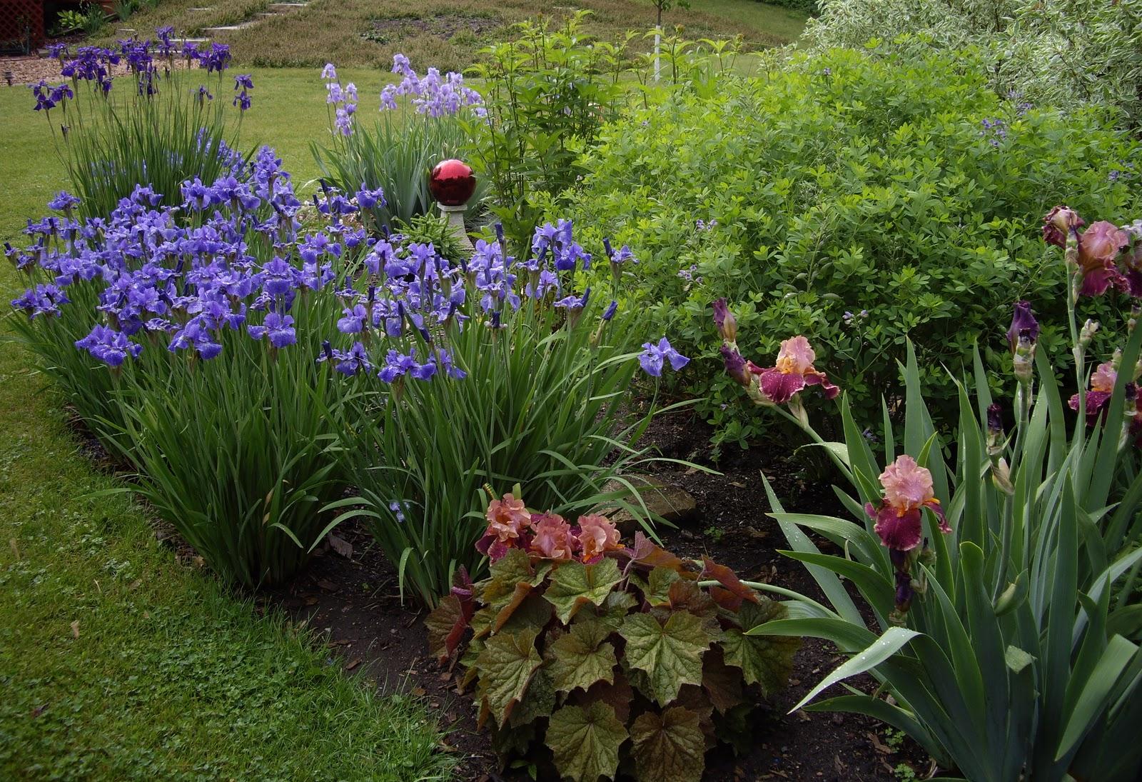 World of irises mass plantings for a breathtaking display izmirmasajfo