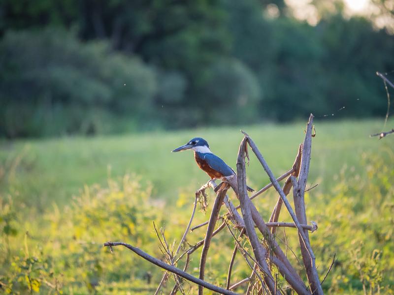 Im Wald stößt sie unverhofft auf einen Schwanz
