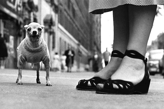 Elliott Erwitt photo 1946 small dog