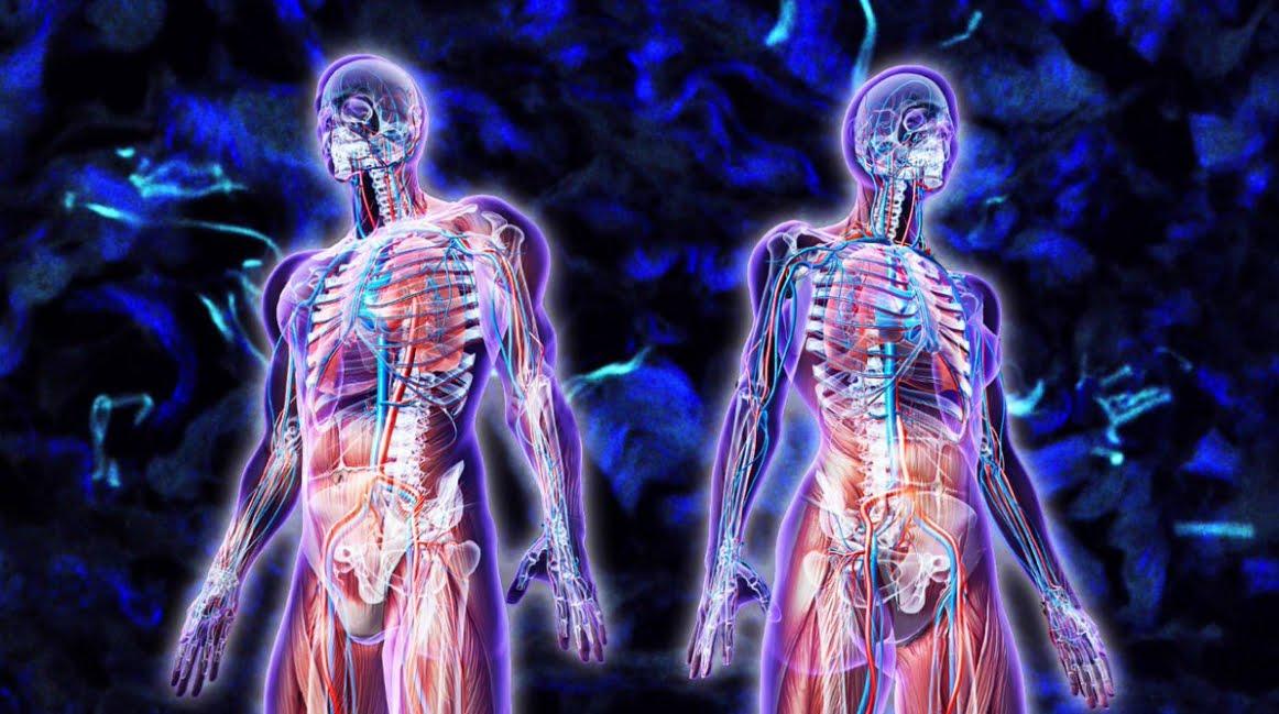 Scoperto un nuovo organo nel corpo umano, si chiama Interstizio