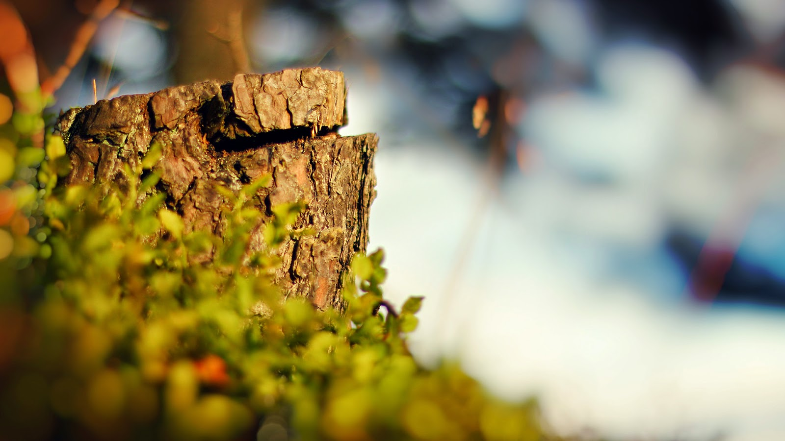 Nature wallpaper 1080p
