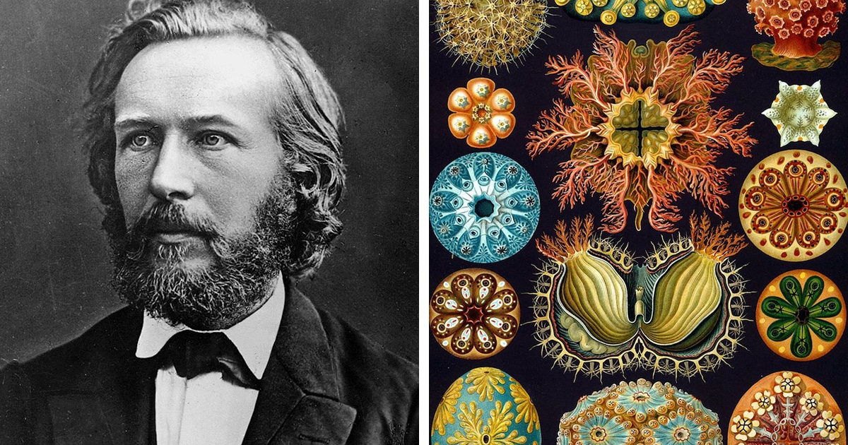 Scientist Illustrated His Microscopic Findings Before Macro Photography Existed