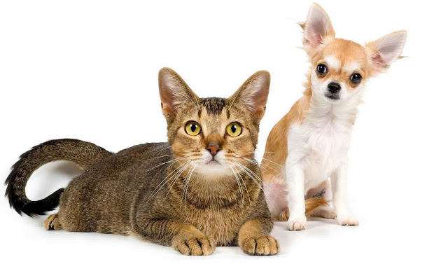 Flea And Tick Pill For Dogs Cats