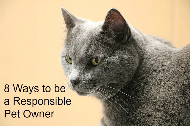 Be a Responsible Pet Owner