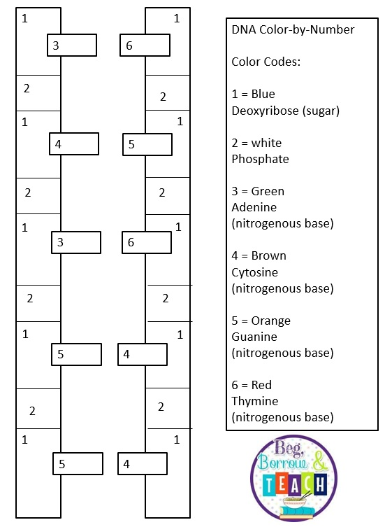 beg borrow and teach dna color by number