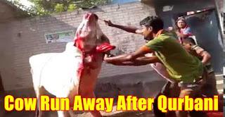 Qurbani Eid 2015, Qurbani Eid, Qurbani Eid 2015 Videos, Qurbani eid 2015 pics,