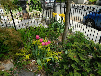 by Paul Jung Gardening Services a Toronto Gardening Company Toronto Spring Front Garden Cleanup Cabbagetown Before