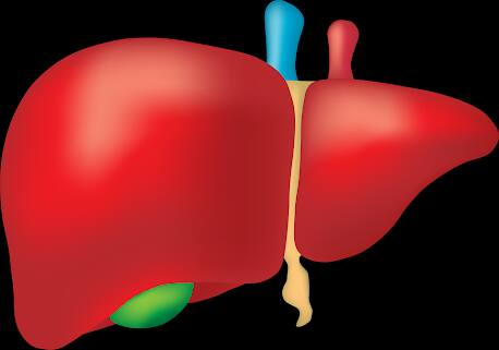 كيفية التخلص من سموم الكبد بشكل سريع%