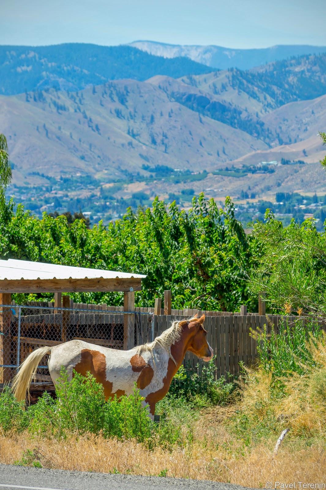 Тут и там пасутся лошади, добавляя окружающей обстановке колорит дикого запада.