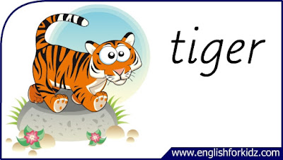 tiger flashcard