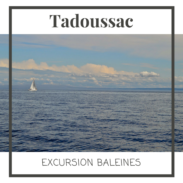 Tadoussac, excursion baleines