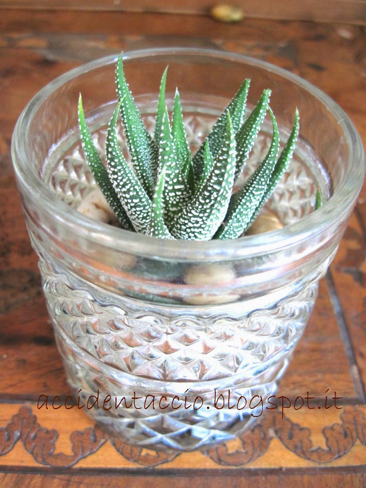 Terrario Per Piante Grasse terrario fai da te riciclando un vecchio bicchiere di vetro
