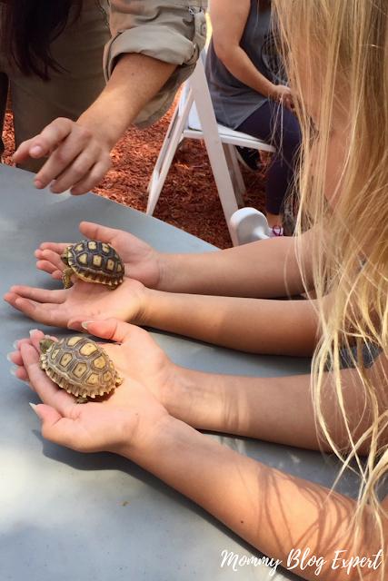 Infant Tortoises