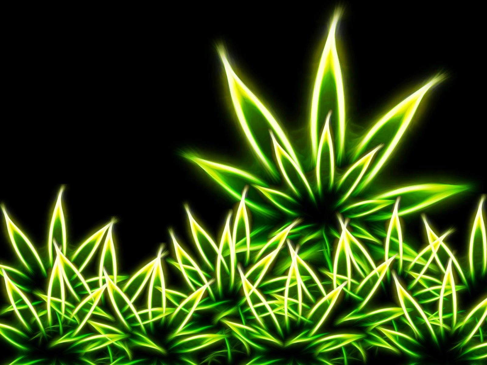 Hybrid Marijuana Weed Pictures