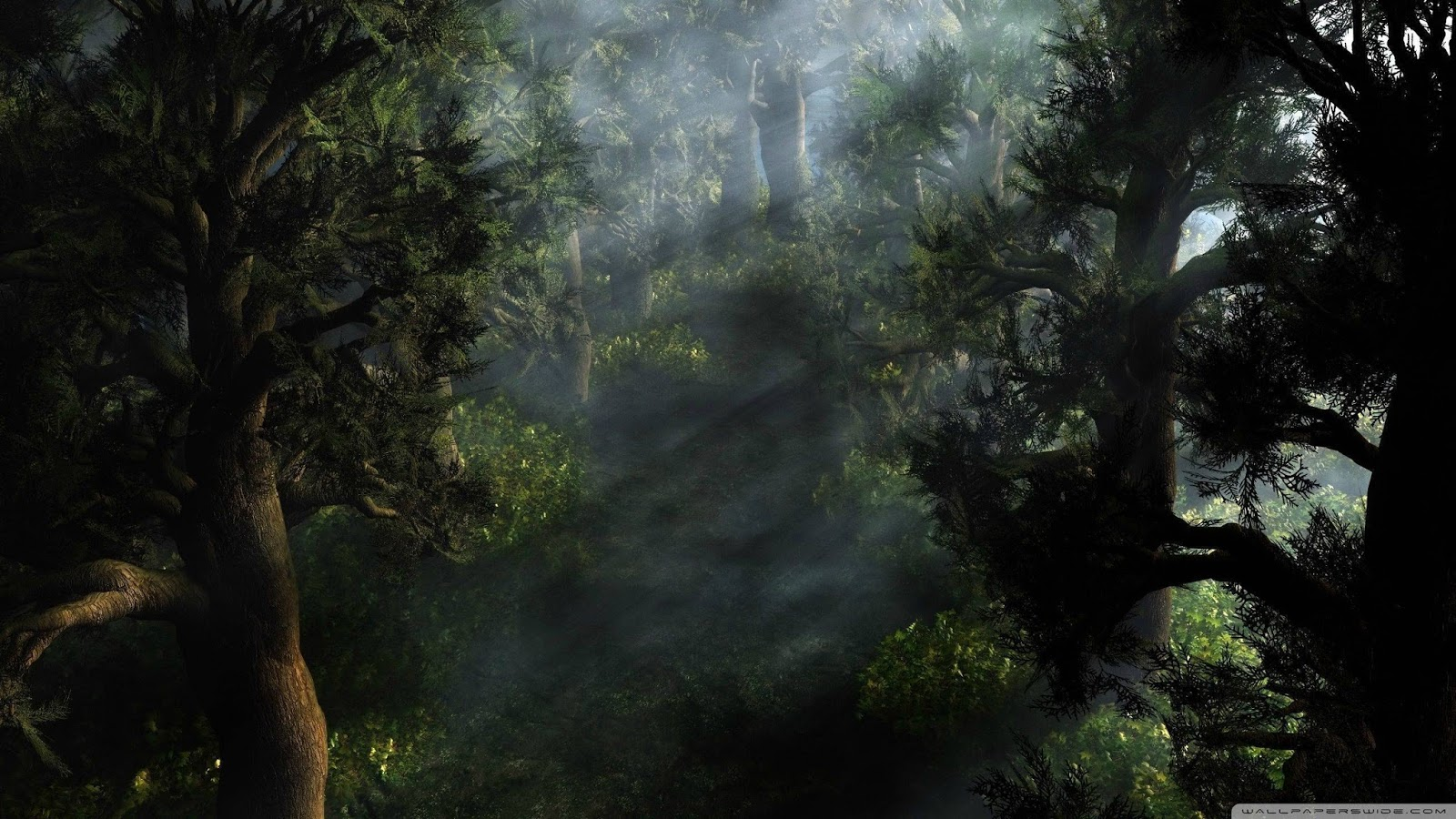 Forest Wallpapers