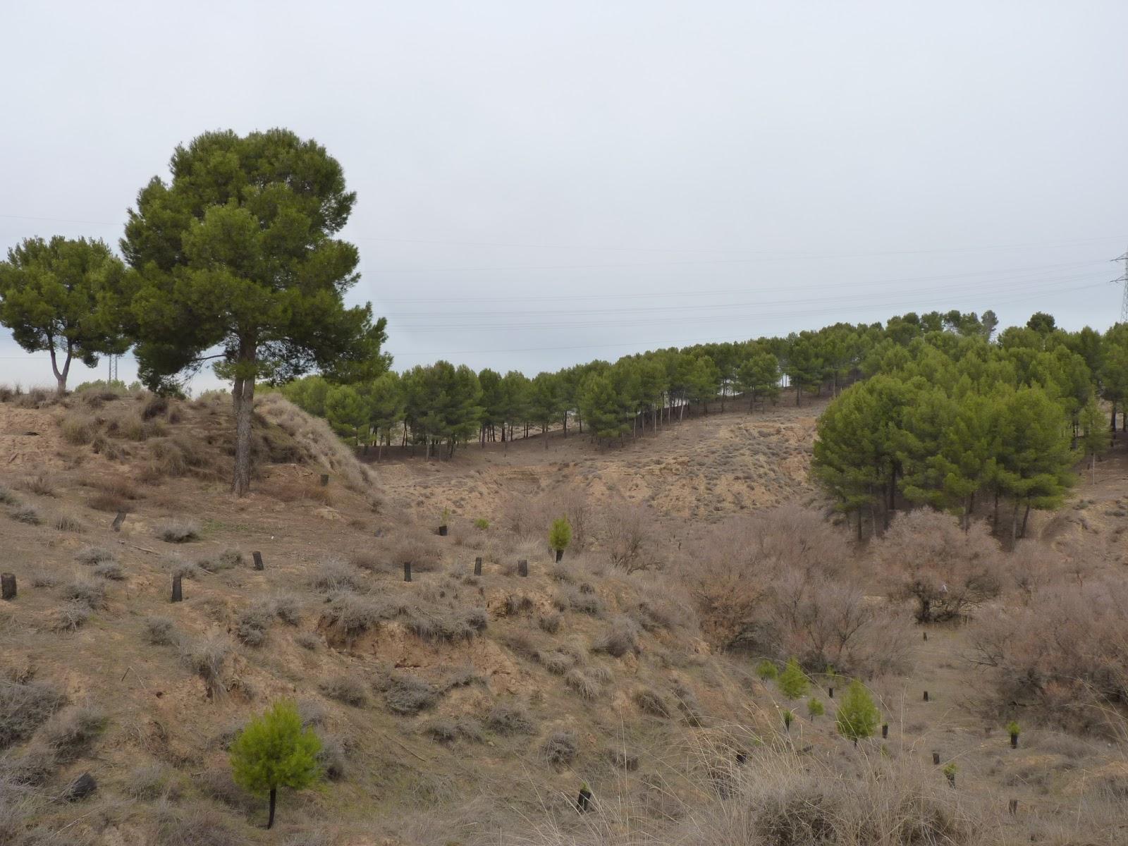 Parque de los Cerros (Alcalá de Henares)