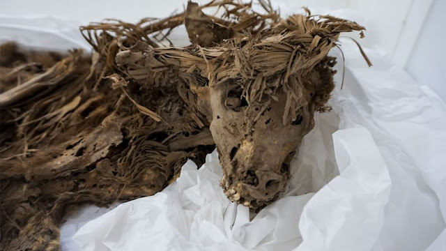 1,000-year-old dog sacrifice burial site found in Peru