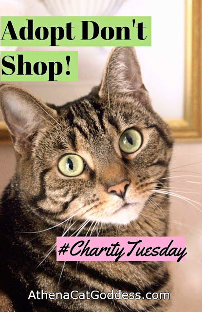 "Tabby cat graphic ""Adopt don't shop"""