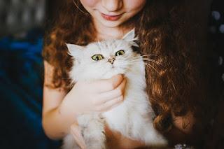 Cara Membuat Kucing Anggora Jinak