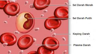 Peredaran darah manusia merupakan peredaran darah tertutup dan ganda geveducation:  Sistem Peredaran Darah Manusia