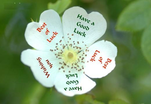 good-luck-wishes-in-hindi