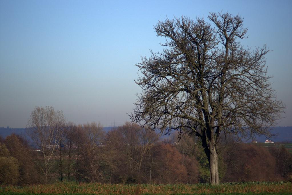 #136 Vivitar Zoom f3.8 75-205mm - Schöner Obstbaum