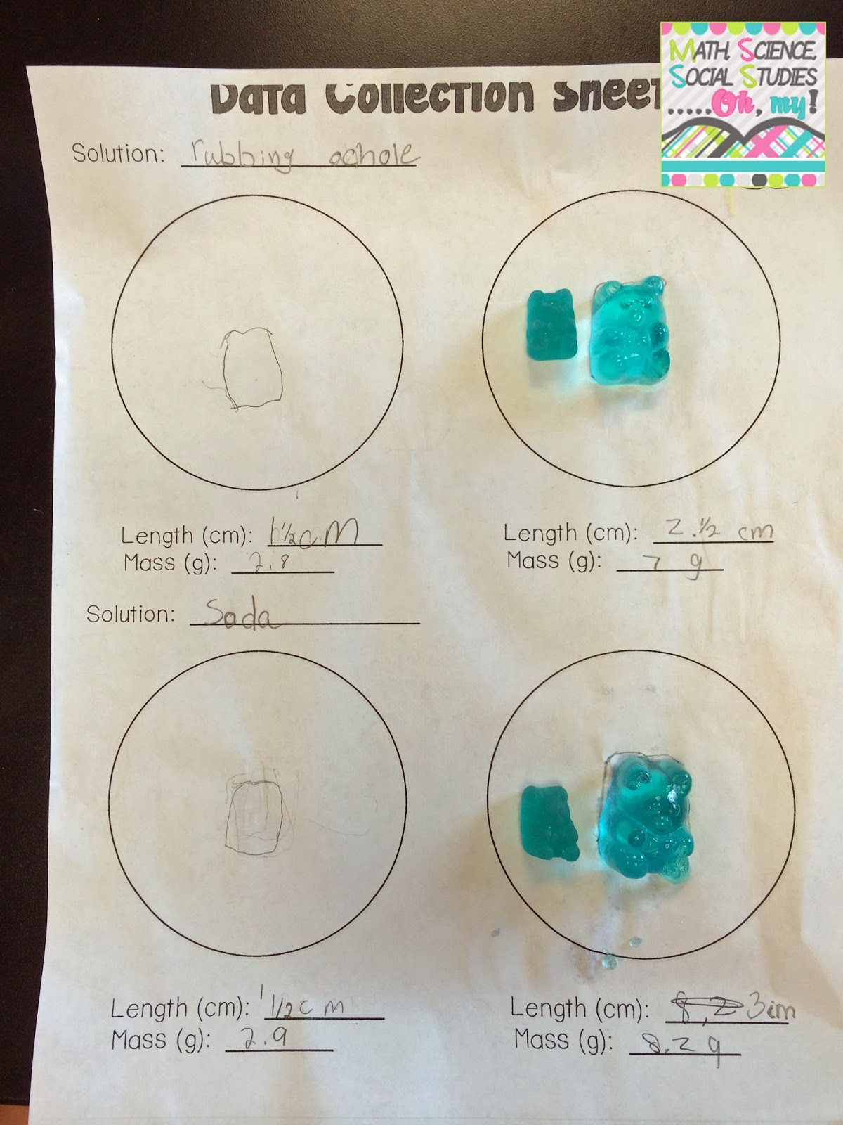 worksheet Gummy Bear Experiment Worksheet corkboard connections investigating gummy bears
