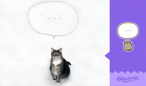 Đã tìm thấy mèo béo Pusheen phiên bản đời thực
