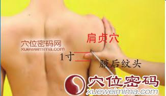 肩貞穴位 | 肩貞穴痛位置 - 穴道按摩經絡圖解 | Source:xueweitu.iiyun.com