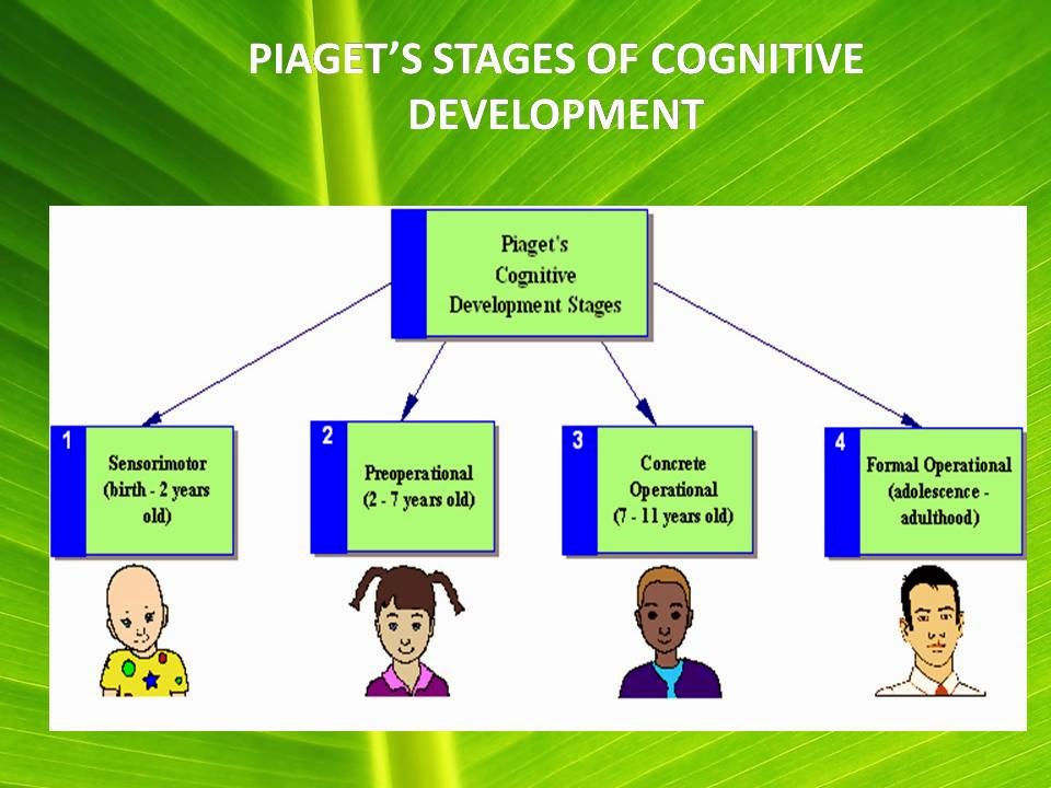 PSYCHOLOGICAL THEORIES JEAN PIAGET\u0027S THEORY OF COGNITIVE DEVELOPMENT - piaget's theory