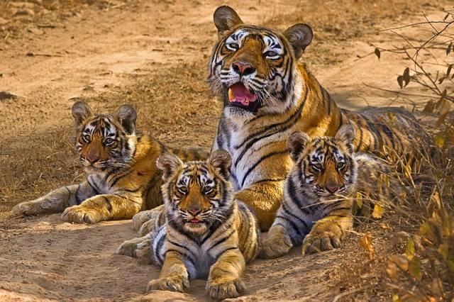 wildlifetourisms.blogspot.in