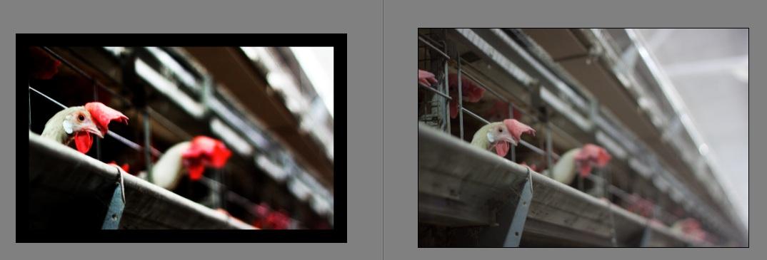 02 01 2012 03 01 2012 Adobe Photoshop Elements