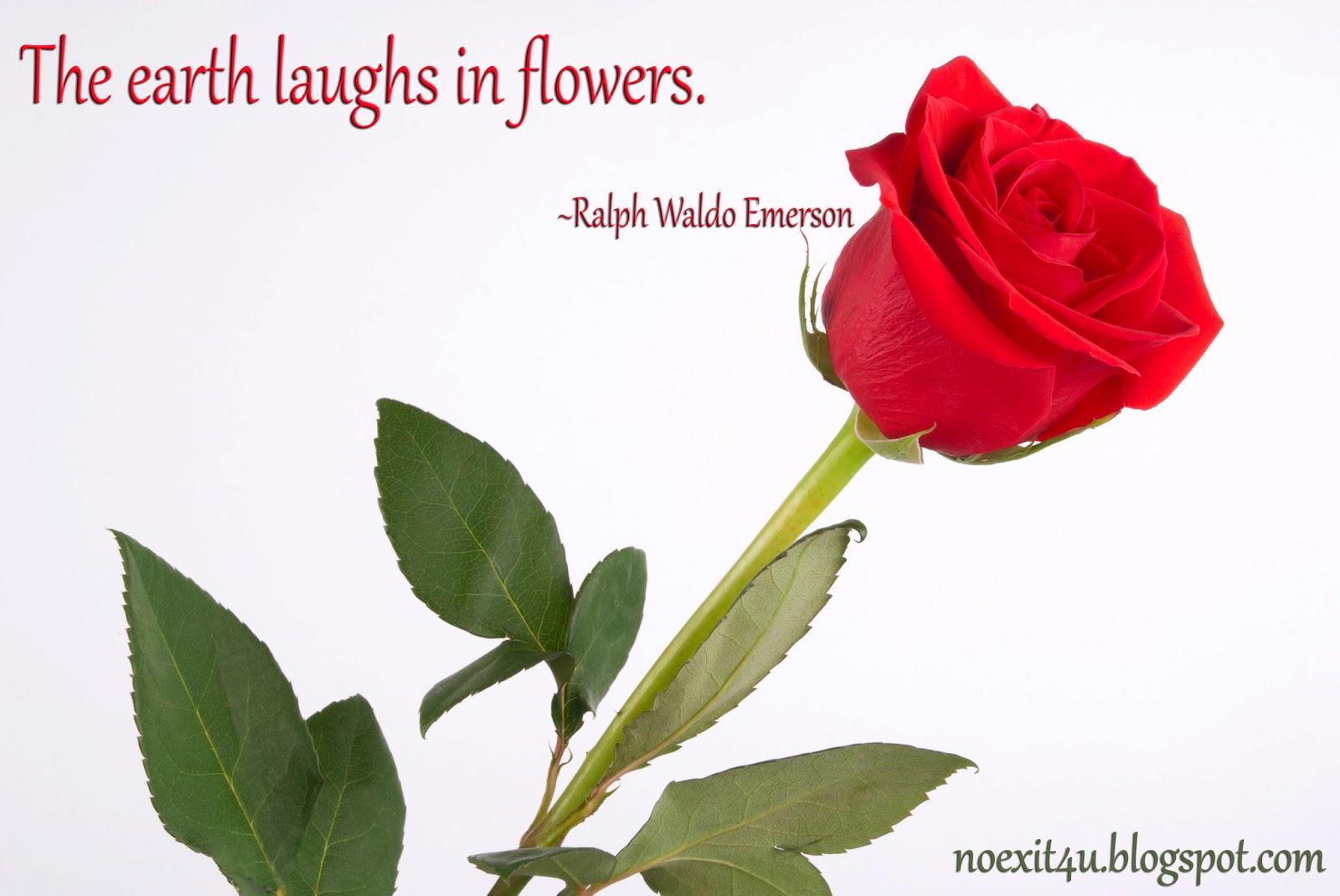 Rose Flower Quotes. QuotesGram