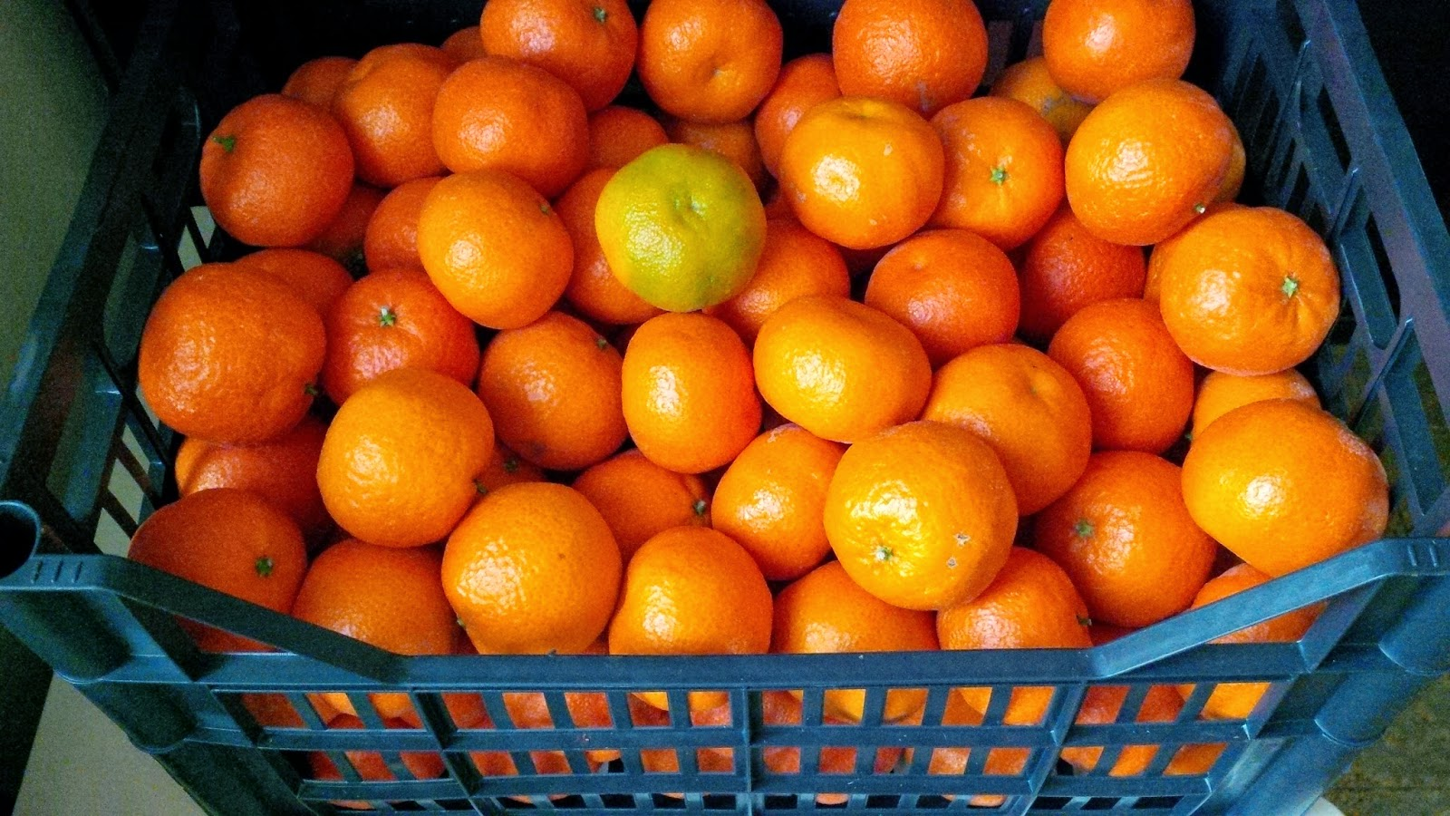 A crate of juicy clementines costs less than 10 euro