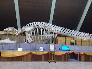 sabah,muzium,ikan paus