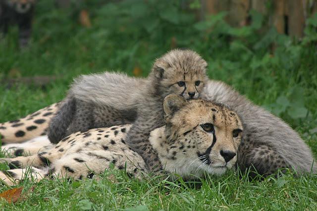 حديقة حيوانات سالزبورغ