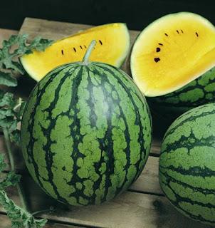 Manfaat Semangka Kuning - 6 Fakta Buah Semangka Yang Belum Banyak Diketahui