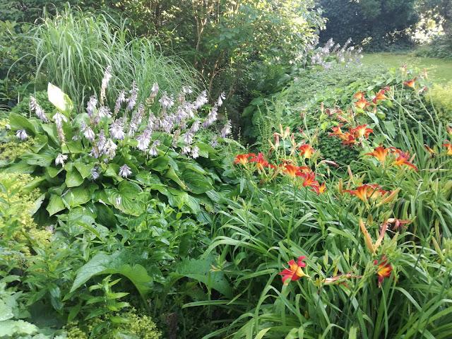 hosty i liliowce