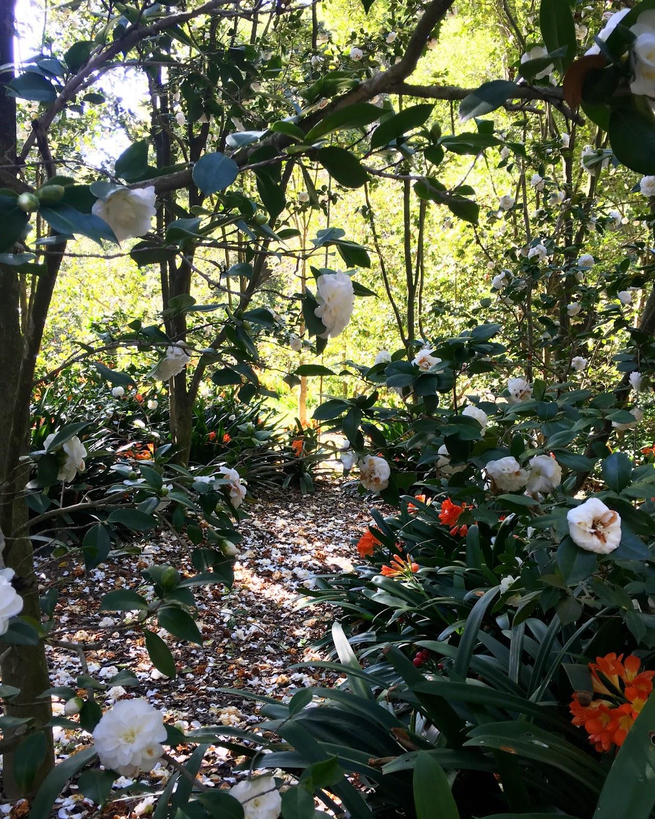 La Locals Love Descanso Gardens Life In Wanderlust
