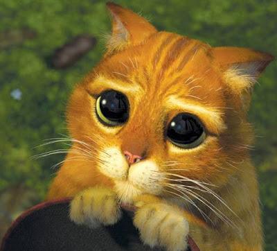Foto de mirada tierna de un gato
