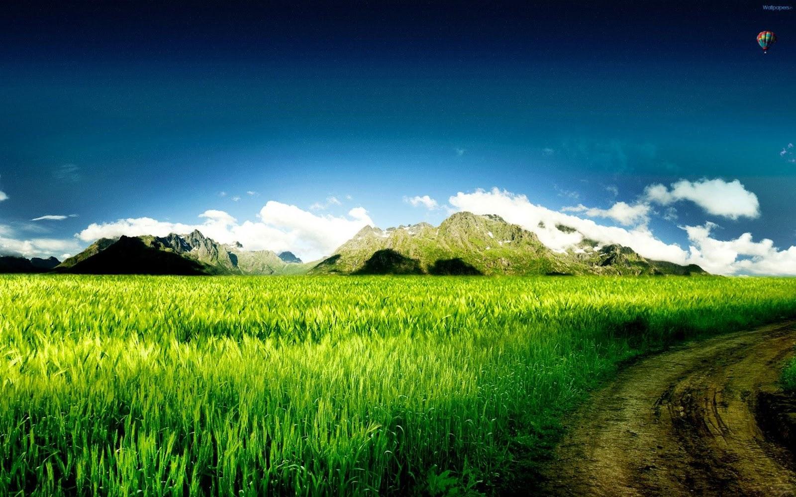 grass landscape hd wallpapers