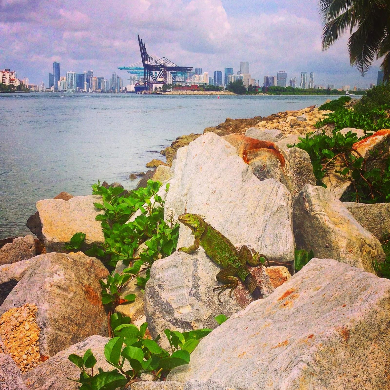 The US Part 1: Miami