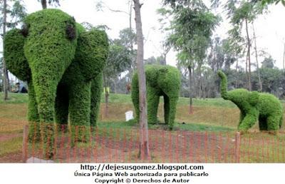 Foto de elefantes grandes y pequeños en Animárboles (Arte topiario) por Jesus Gómez