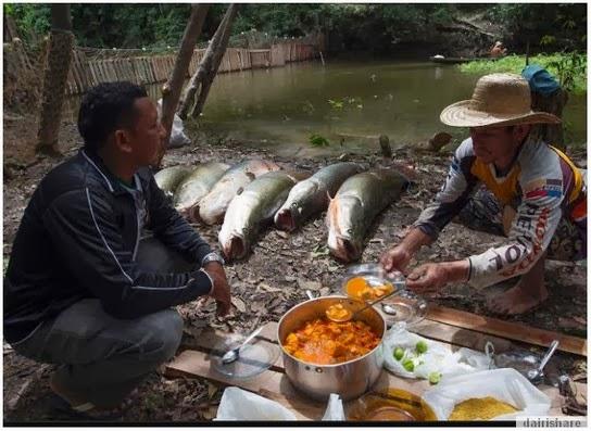 Pemburuan Ikan Arapaima Di Sungai Amazon