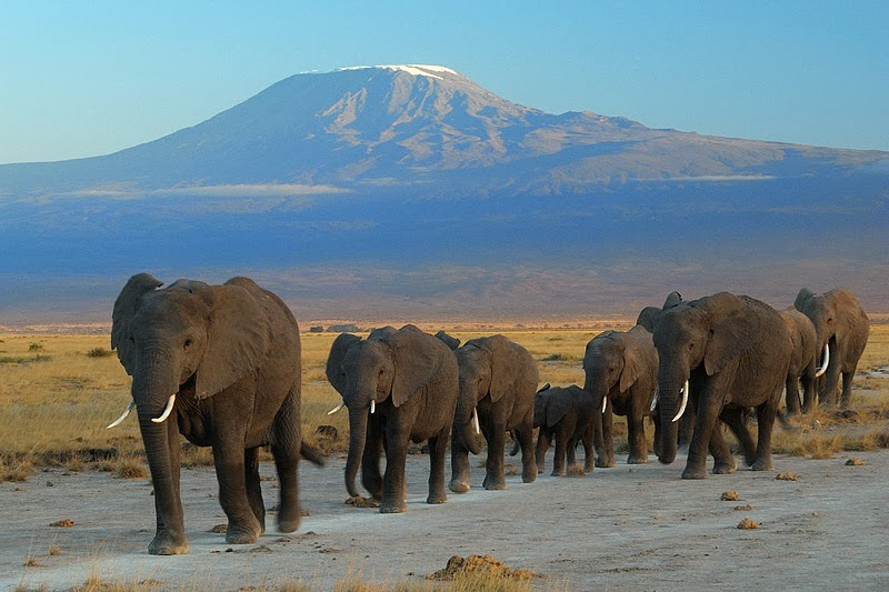 Mount Kilimanjaro, Kilimanjaro National Park, Tanzania - Top 10 Stunning Volcanoes Around the World