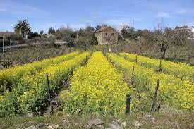 Portugal na Primavera - Campo de Flores