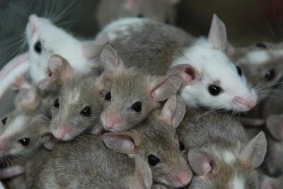 Mäuseplage im Wohnwagen