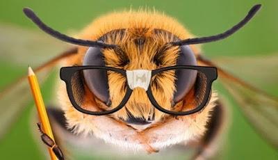 Tak Disangka, Otak Lebah Ternyata Mahir Matematika Dasar