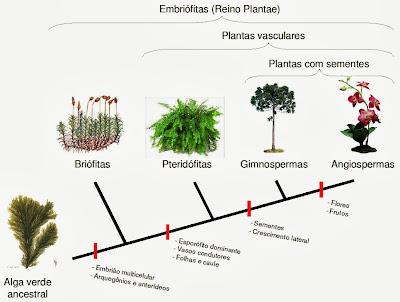 Evolução das plantas