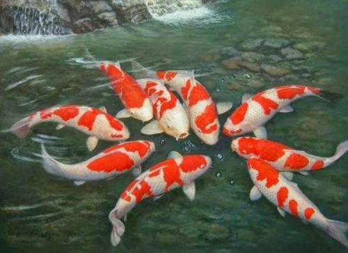 Ý nghĩa của những bí ẩn giấc mơ thấy cá
